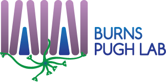 Burns & Pugh Lab Logo